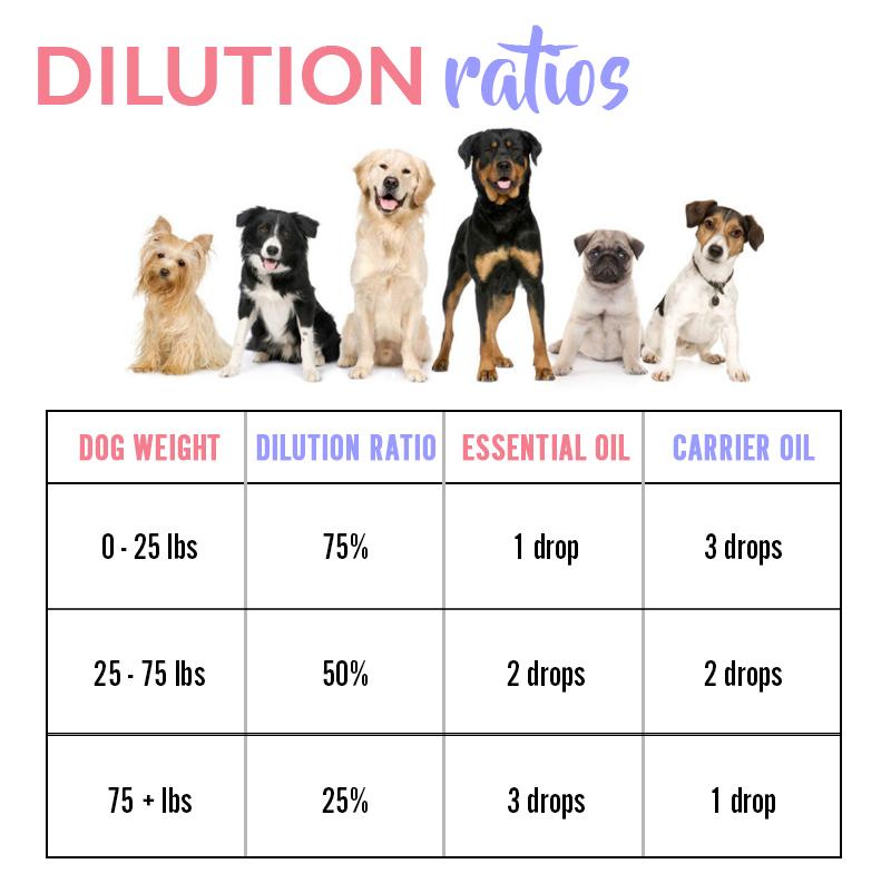 dog dilution ratios